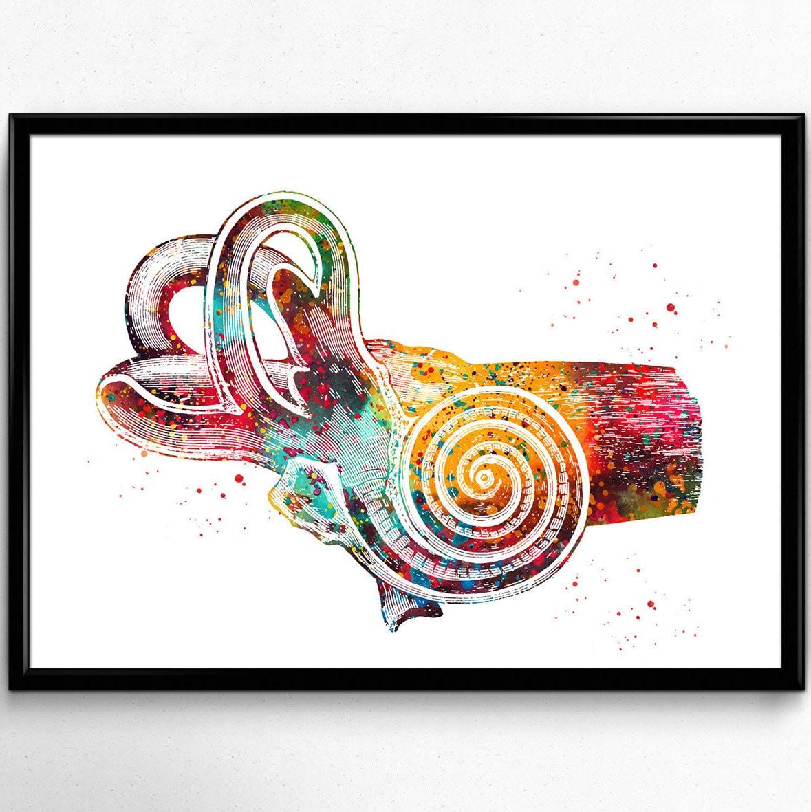 Human Ear Anatomy Watercolor Print Audiology Poster Cross