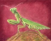 The Alien - Original Drawing in Coloured Pencil