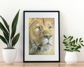Giclée Art Print 'Proud' - A4 size soft pastel drawing, wildlife realistic male lion painting, closeup portrait wall art leo zodiac gift