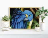 Giclée Art Print 'Hyacinth Macaw' - A4 size colored pencil drawing by Wild Portrait Artist, wildlife realistic parrot painting
