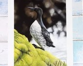 Giclée Art Print 'Respite on the Rocks' -A4 size soft pastel drawing by Wild Portrait Artist, wildlife realistic guillemot painting sea bird