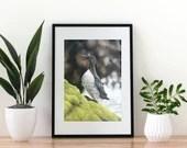 Giclée Art Print 'Respite on the Rocks' -A4 size soft pastel drawing by Wild Portrait Artist, wildlife realistic guillemot painting sea bird