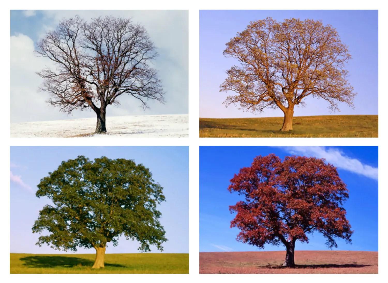 Tree In 4 Seasons Four Seasons Nature Photo Set Of 4