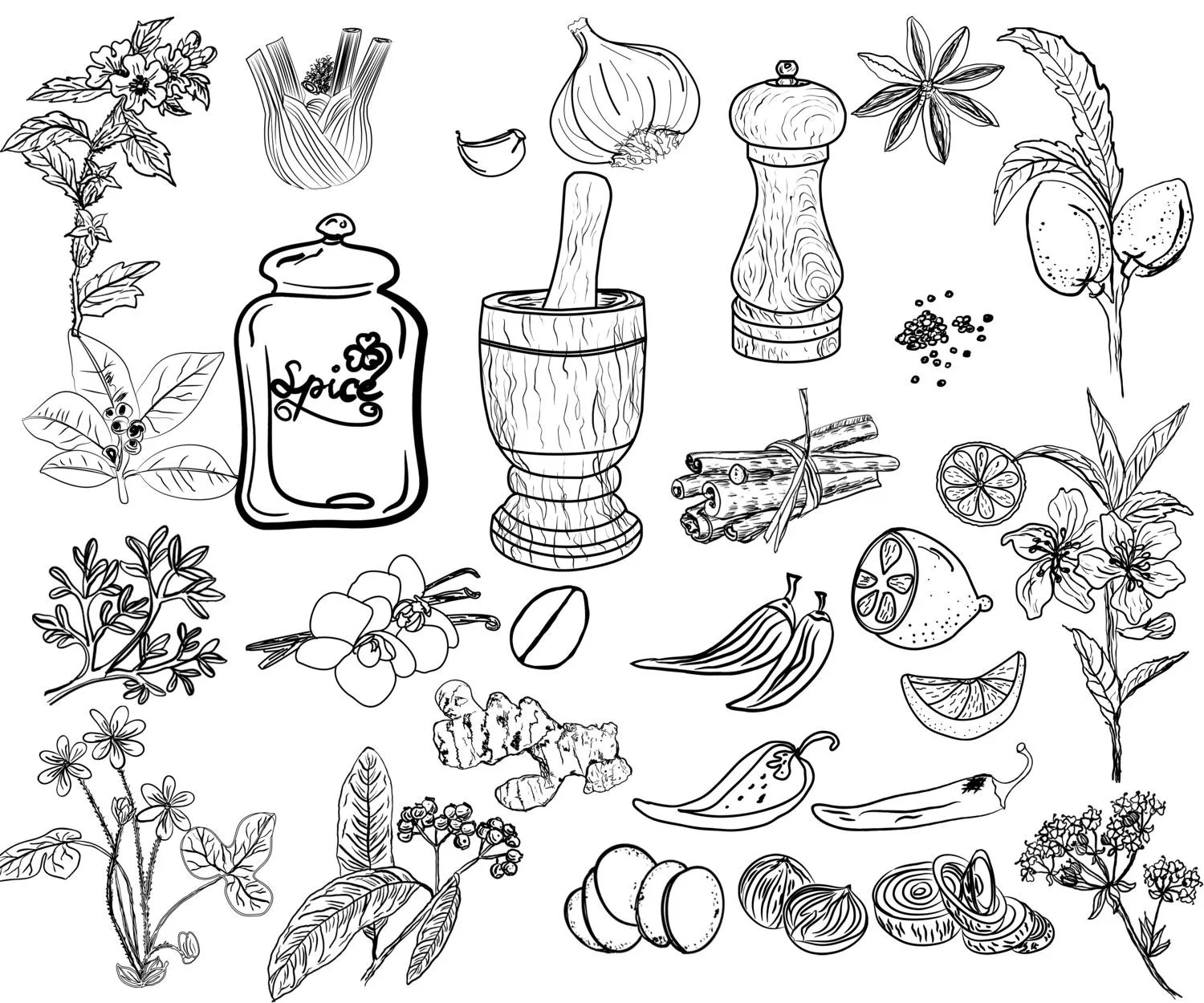 Kitchen Doodle Clipart Herbs And Spices Herbs
