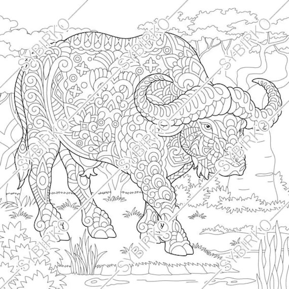 Coloring Pages For Adults Buffalo Bison Bull Adult Coloring Etsy
