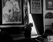 Cat Photo, black and whit...
