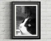 Feral Cat Photo, Black an...