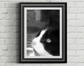 Feral Cat Photo, Black and White Cat Photo, Veterinary Art, Wall Art Print, Printable Large Poster, Digital Download, Cat Photo, Note Cards