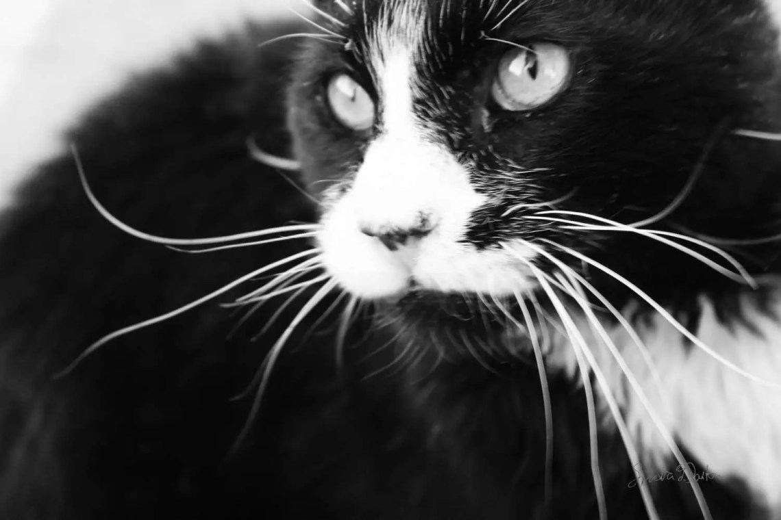 Feral Cat Photography, Bl...