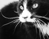 Feral Cat Photography, Black and White Photo, Veterinary Art, Wall Art Print, Printable Large Poster Digital Download, note cards