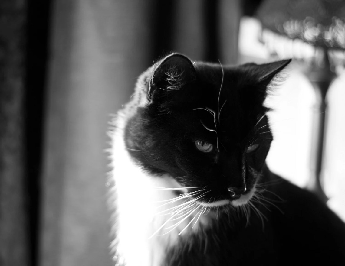 Sylvester, Black and Whit...