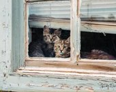 Kittens in Window, Color Kitten Photo, Digital Download, Printable Wall Art, Vintage-Inspired, Home Décor, Note Cards, Cat Art