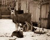 Deer with Cat Photo, Urba...