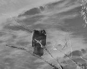 Vulture Photo, Wildlife Photo, Black and White Photography, Home Decor, Halloween, Fine Art Photography