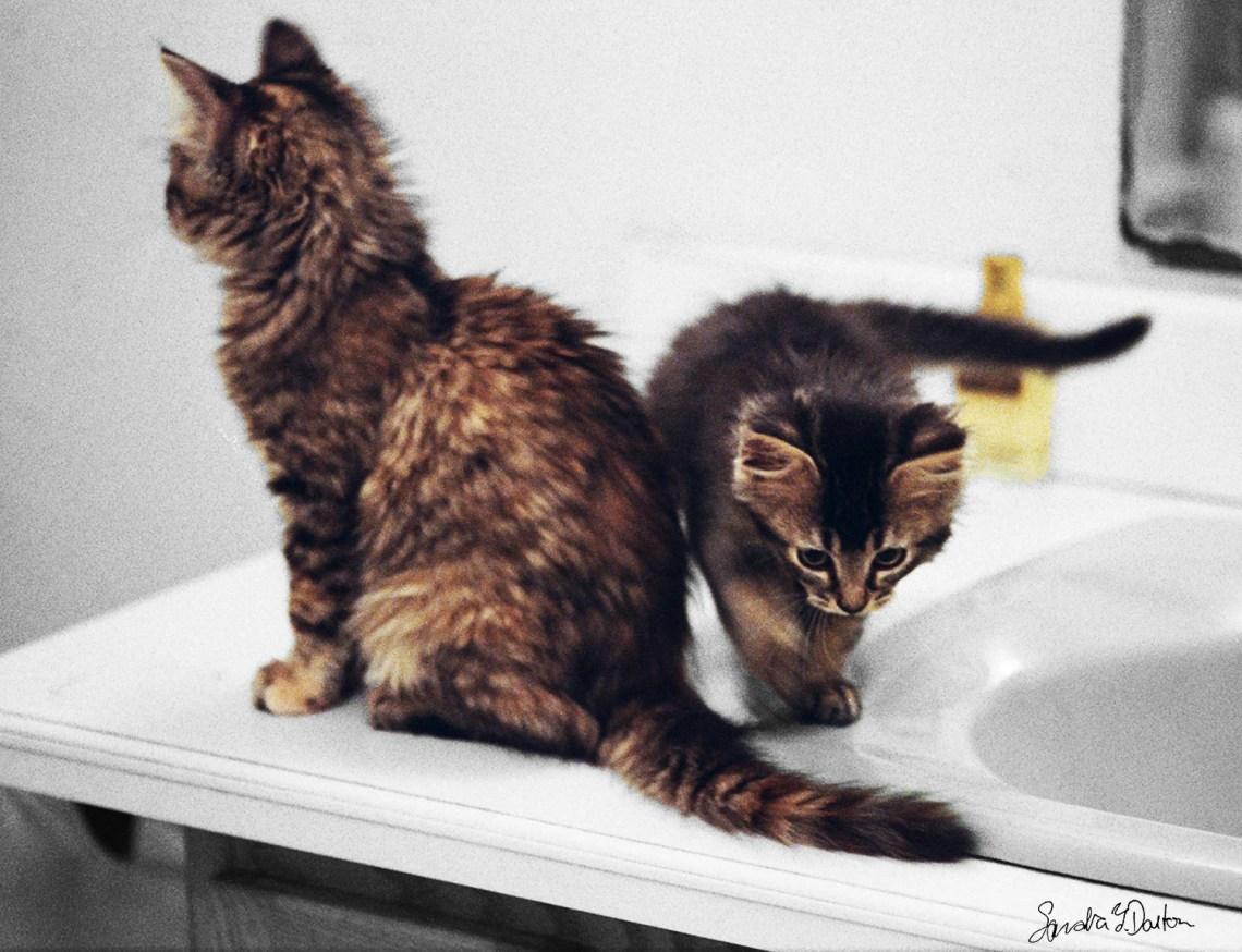 Color Kitten Photo, Black...