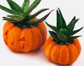 Halloween Planter, Pumpki...