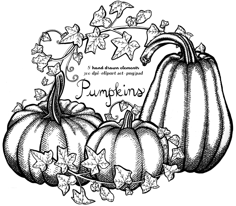 Fall Pumpkin Clipart Instant Download Pen Amp Ink