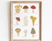 Edible Mushrooms Art Print, botanical mushroom print, fungi print, scientific illustration