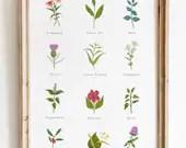 Herbal Tea Leaves Print - Home Decor - Kitchen Wall Decor