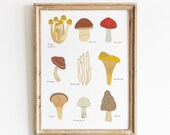 Edible Mushrooms Print - Fungi Giclee Art Print - Scientific illustration