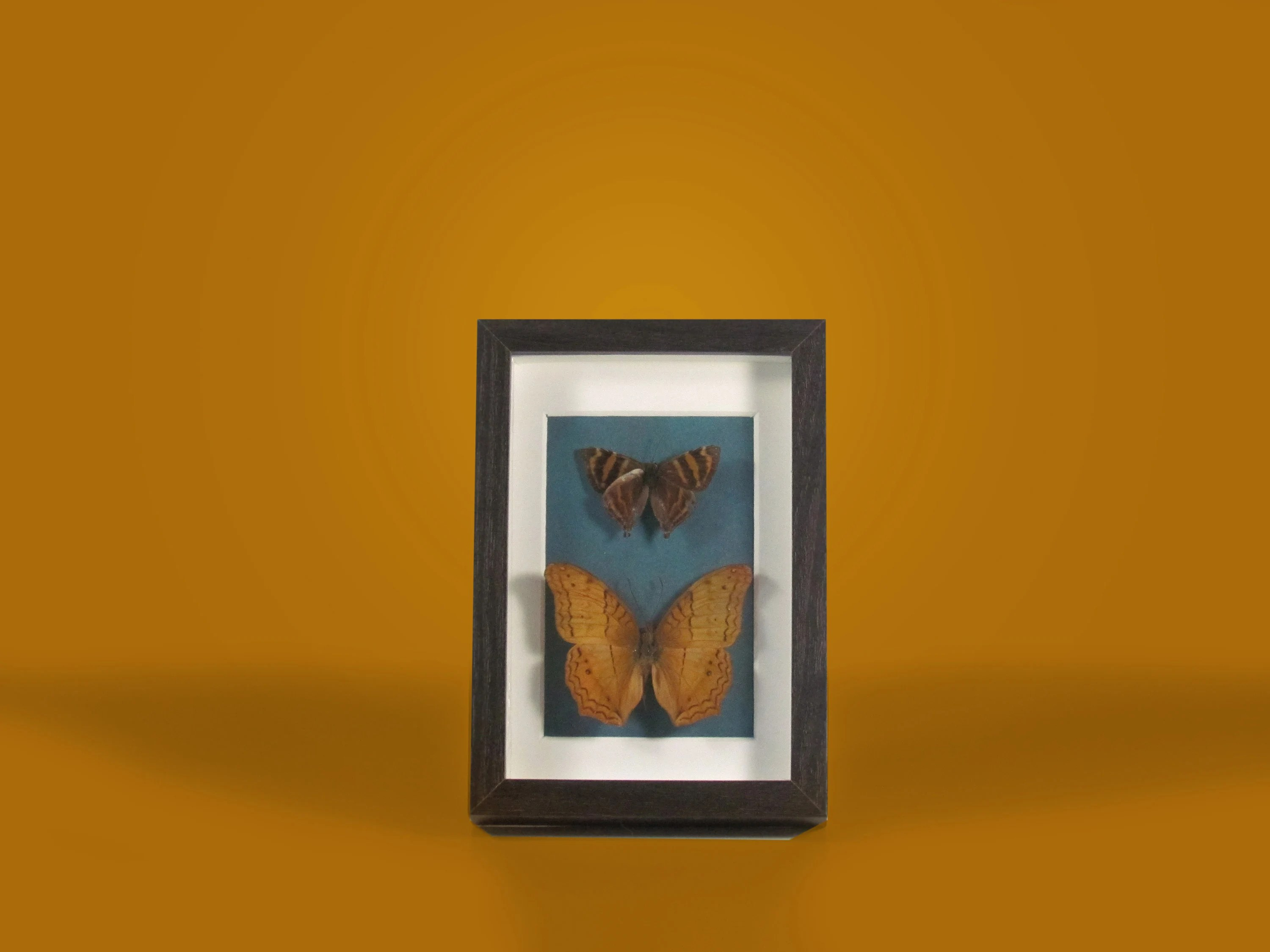 Unique home decor   Etsy Real Mounted and Framed Butterflies  Natural Fantasies Artwork  Unique Home  Decor and Curiosities
