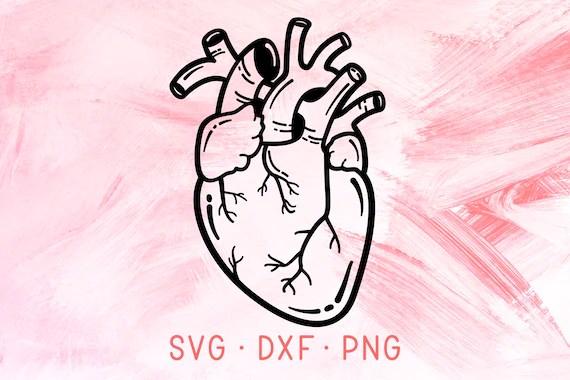 Anatomical Heart Svg Dxf Png Cricut Cut File Real Human Heart Etsy
