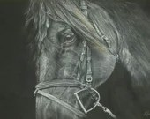 The Stallion | An original artwork by Christopher Amos | Pastel art