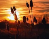 Cattails and Sunset / Blank Greeting Card / Note Card / Nature / Photography