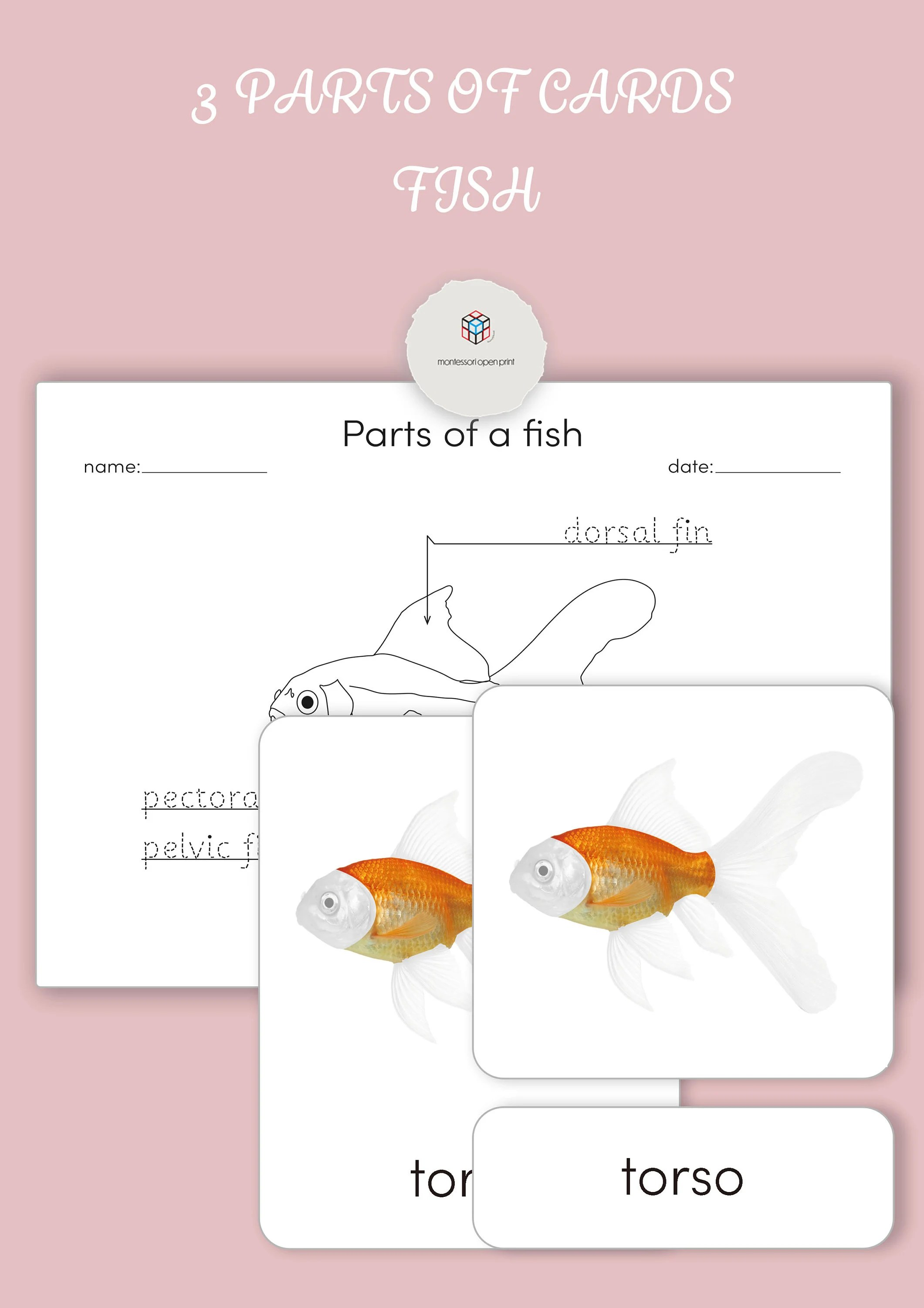 Montessori 3 Part Cards Parts Of A Fish