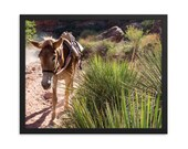 Framed Photo Paper Poster - Desert Mule