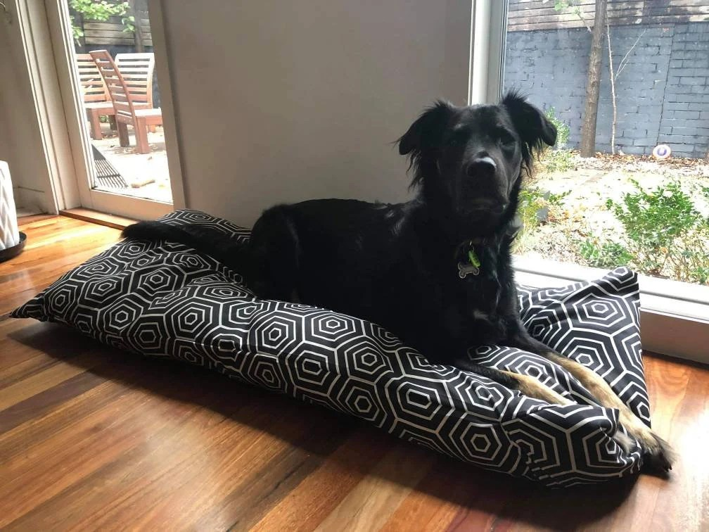 large dog bed ideas for australian dogs