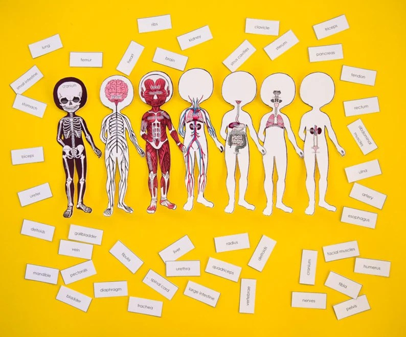 Anatomy Dress-Up & Magnetic Printable Paper Dolls for Kids ...