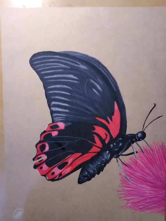 Colored Pencil Drawing Of A Butterfly Etsy