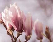 Magnolienbild, Frühling, Fine Art Fotografie, Fotografie Kunstdruck, Wandbild Blumen, Bild für Schlafzimmer, Natur Foto, Druck Blumen