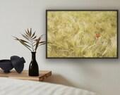 Mohn, Bild Wiese, Kornblume, Fine Art Fotografie, Pflanzen Bilder, Fotografie Natur, Landschaftsbilder, Fotografie Landschaft, Druck Natur