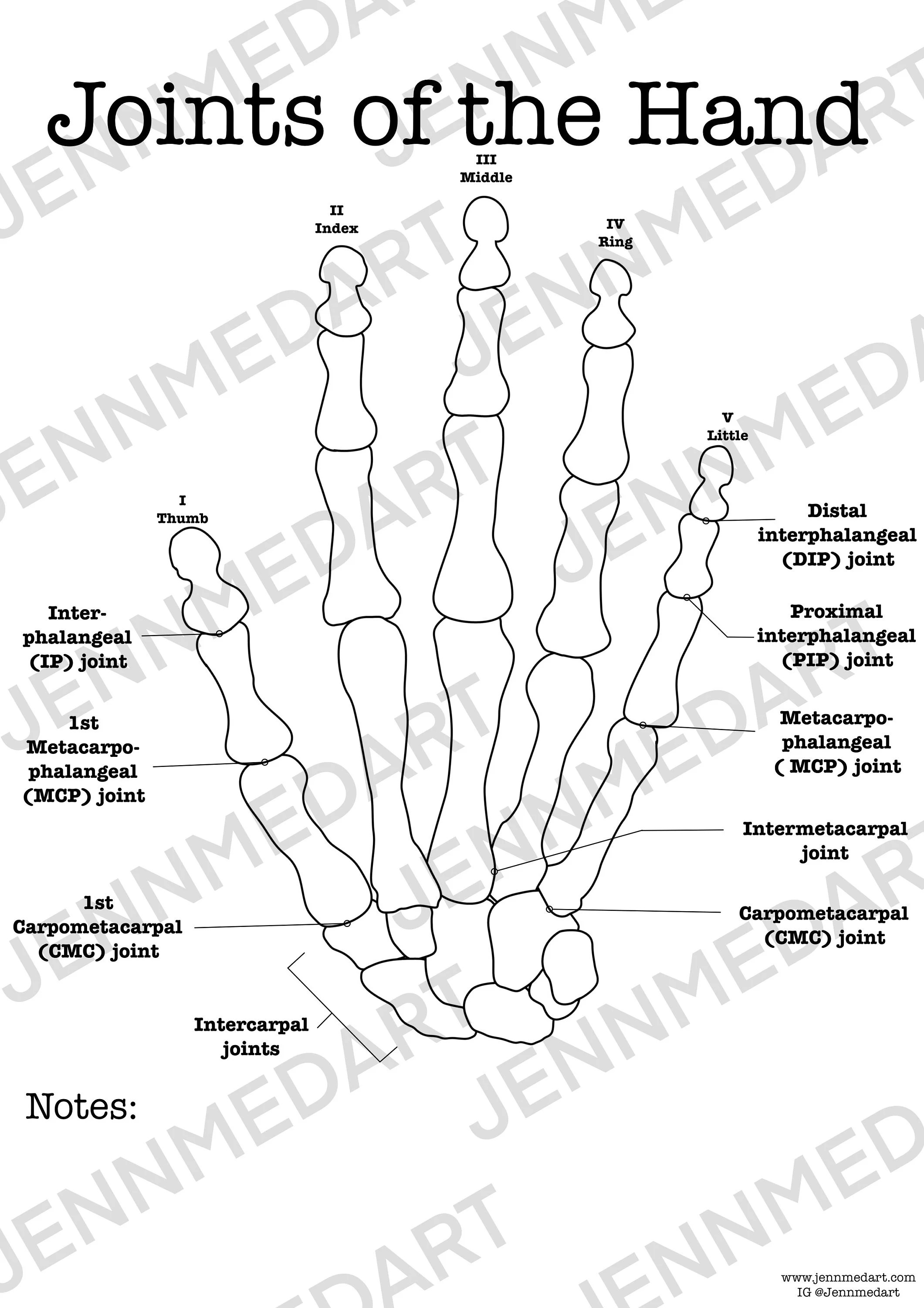 Joints Of The Hand Anatomy Worksheet 3 In 1 Set A Labeled