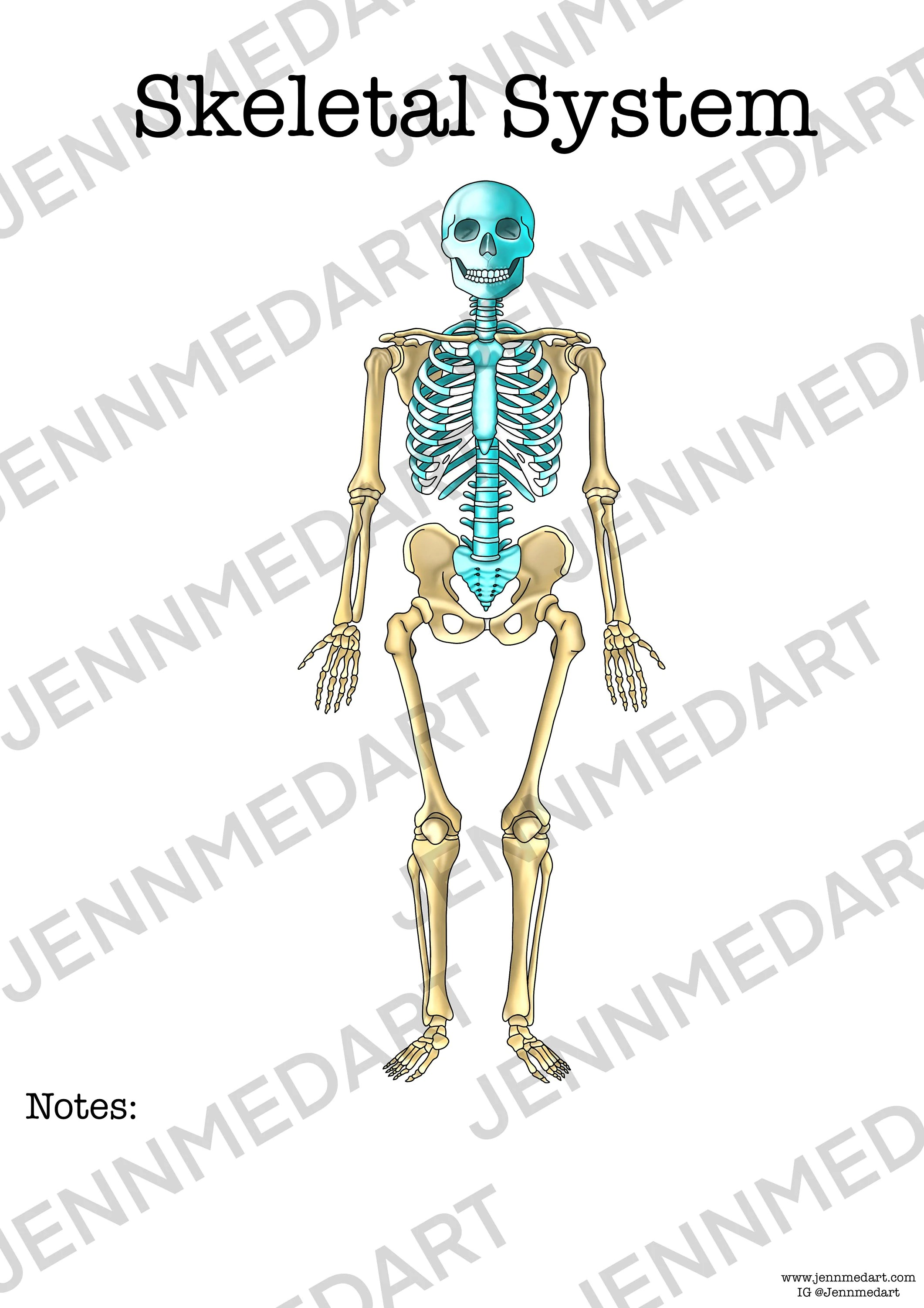 Skeletal System Anatomy Worksheet 3 In 1 Set A Labeled