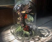 Local Pick-Up/Drop-Off Only (DENVER, CO) ** Asterope Optima, Polished Red Jasper, Moss and Dried Florals in Glass Dome Display