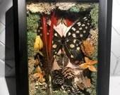 Pharmacophagus Antenor (Madagascar Giant Swallowtail), Cymothoe Sangaris (Blood-Red Glider), Natural Mixed Media in Shadow Box Frame