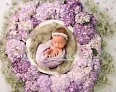 Purple Hydrangeas Newborn Digital Backdrops Lot (3)