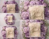 Purple Hydrangeas Newborn Digital Backdrops Lot (5)
