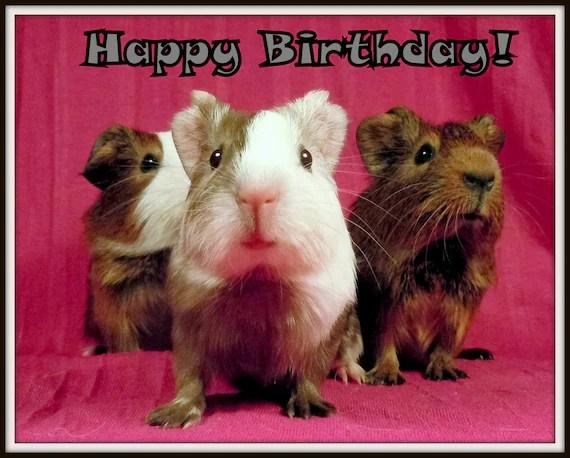 Happy Birthday 5 Pc Meerschweinchen Novelty Magnete Etsy