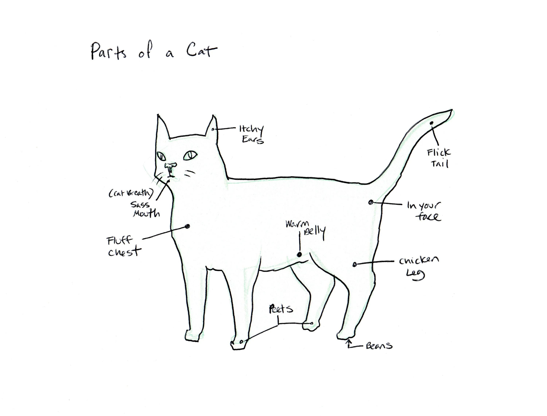 Parts Of A Cat