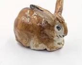 Little brown bunny rabbit
