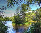 Island of small trees surrounded by water hdr image print, nature and landscape, small tree island, outdoor photos, landscape images