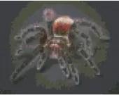Cross stitch tarantula pdf pattern