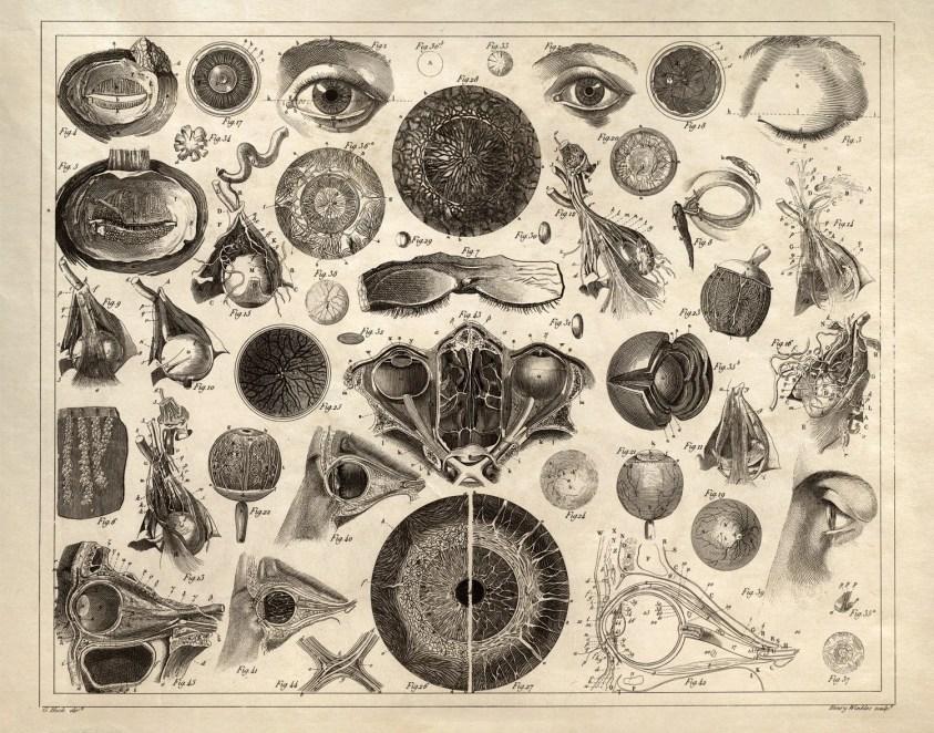 Vintage Anatomy Eye Chart Print - Biology Optometry ...