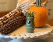 Monster with Air Plant // Wheel thrown and Sculpted planter with monster face // includes live plant / fall decor - READY TO SHIP