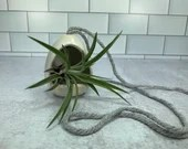Hanging miniature pottery with air plant // Air Plant Included // Valentines Day // Hearts // Love // Wheel-Thrown - READY TO SHIP