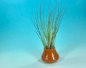 Mini planter with Air Plant // Miniature Pottery with hand carved detail in orange - READY TO SHIP